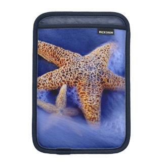 米国、サウスカロライナ、Hilton Head Island。 2 iPad Miniスリーブ