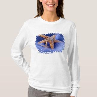 米国、サウスカロライナ、Hilton Head Island。 2 Tシャツ