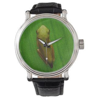 米国、ジョージアのサバンナ、葉の小さいカエル 腕時計