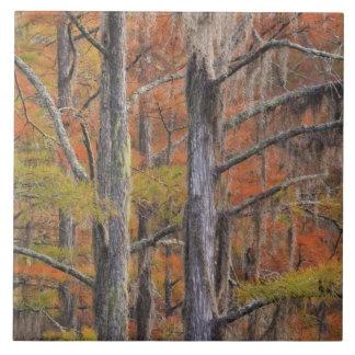 米国、ジョージアのジョージスミスの州立公園、Cypress タイル