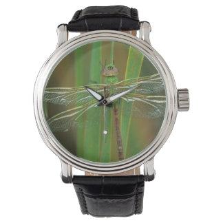 米国、ジョージア。 リードの緑のdarnerのトンボ 腕時計