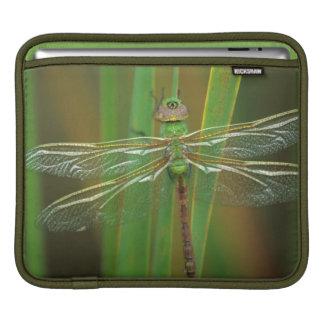 米国、ジョージア。 リードの緑のdarnerのトンボ iPadスリーブ