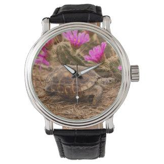 米国、テキサス州、Hidalgo郡。 カメ 腕時計