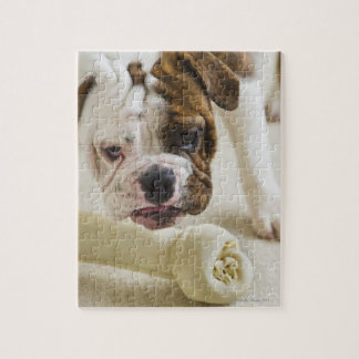米国、ニュージャージー、ジャージーシティーのかわいいブルドッグの子犬 ジグソーパズル