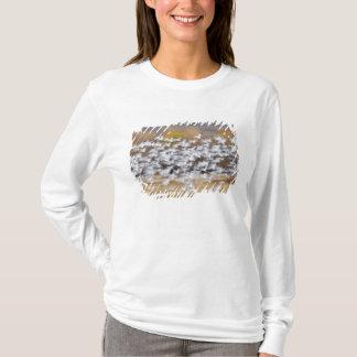 米国、ニューメキシコ、Bosque delアパッシュNational 3 Tシャツ