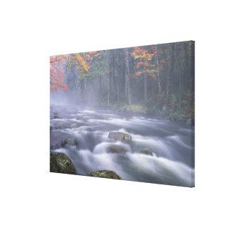 米国、ニューヨークのAdirondacks、大きいアメリカヘラジカの川 キャンバスプリント