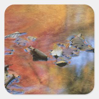 米国、ニューヨークのAdirondacks、落ちたな葉 スクエアシール