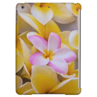 米国、ハワイ、オアフのプルメリアは開花1で開花します