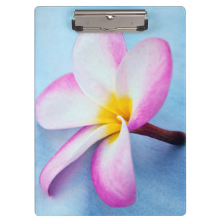 米国、ハワイ、オアフのプルメリアは開花2で開花します クリップボード