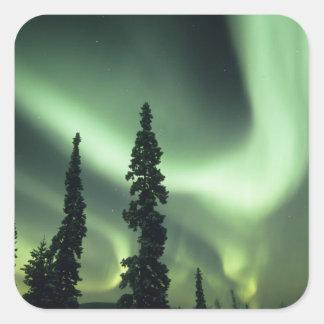 米国、フェアバンクス区域、中央アラスカのオーロラ2 スクエアシール