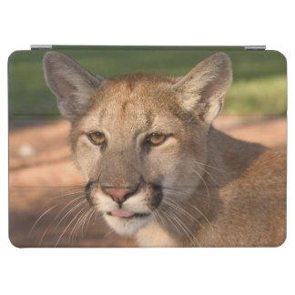 米国、フロリダのヒョウ(ネコ属のconcolor)はまたあります iPad air カバー