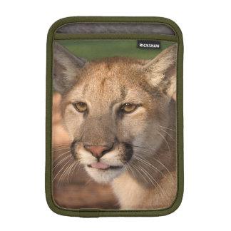 米国、フロリダのヒョウ(ネコ属のconcolor)はまたあります iPad miniスリーブ