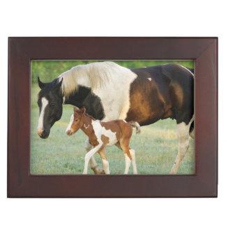 米国、フロリダの生まれたばかりのなペンキの雌の子馬 ジュエリーボックス