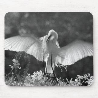 米国、フロリダの素晴らしい白鷺(アルバArdea)の赤外線2 マウスパッド