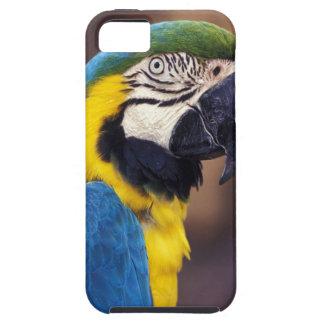 米国、フロリダ。 コンゴウインコ iPhone SE/5/5s ケース