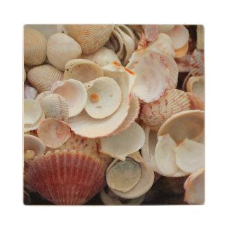 米国、フロリダ。 Santa Rosaの貝の閉めて下さい ウッドコースター