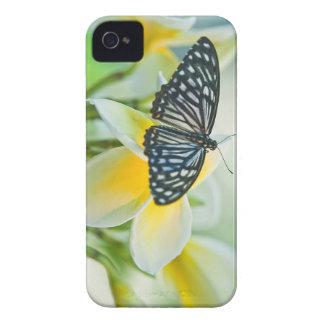 米国、ペンシルバニア。 アゲハチョウの蝶 Case-Mate iPhone 4 ケース