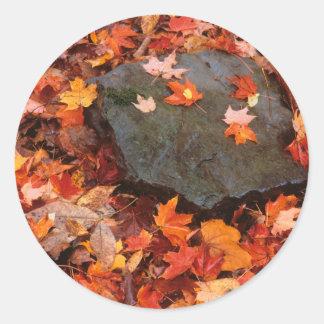 米国、ペンシルバニア。 森林床のクローズアップ 丸型シール