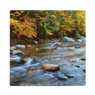 米国、マサチューセッツ、サヴォイの国家の森林。 秋 ウッドコースター
