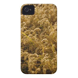 米国、ミズーリのキツネの尾(ダイアスポア) 2 Case-Mate iPhone 4 ケース