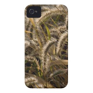 米国、ミズーリのキツネの尾(ダイアスポア) Case-Mate iPhone 4 ケース