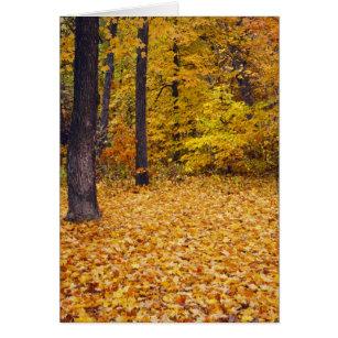 米国、ミズーリ、ブーン郡のかえでの森林 カード