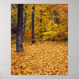 米国、ミズーリ、ブーン郡のかえでの森林 ポスター