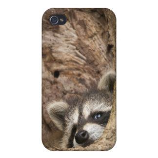 米国、ミネソタの砂岩、ミネソタの野性生物3 iPhone 4/4S CASE