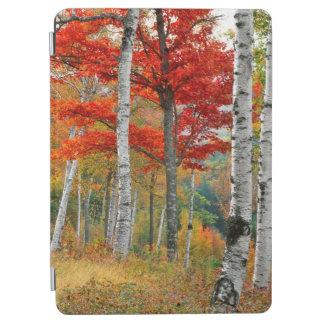 米国、メインのWyman湖。 樺の木の森林 iPad Air カバー