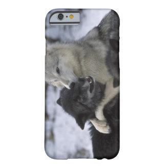 米国、モンタナの雪で遊んでいるオオカミ BARELY THERE iPhone 6 ケース