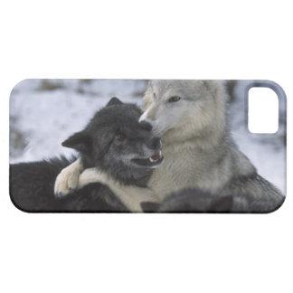 米国、モンタナの雪で遊んでいるオオカミ iPhone SE/5/5s ケース