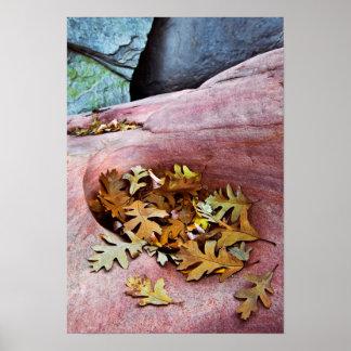 米国、ユタのザイオン国立公園。 Gambelのカシの葉 ポスター