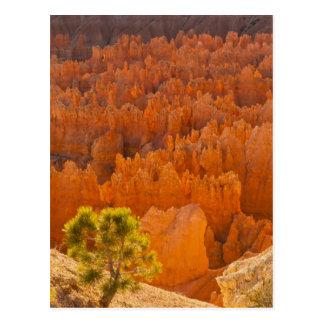 米国、ユタのブライス渓谷の国立公園 ポストカード