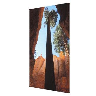 米国、ユタのブライス渓谷の国立公園。 高い キャンバスプリント