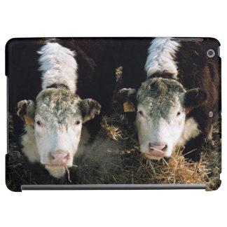 米国、ユタの隠し場所の谷、Herefordの雄牛