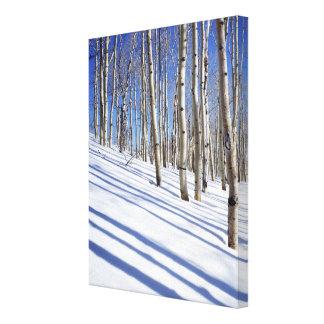 米国、ユタのDixieの国有林、《植物》アスペン果樹園 キャンバスプリント