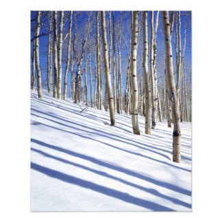 米国、ユタのDixieの国有林、《植物》アスペン果樹園 フォトプリント