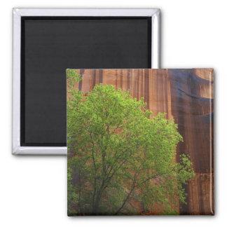 米国、ユタのParia渓谷の朱色の崖 マグネット