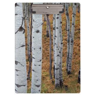 米国、ユタのUinta Wasatch隠し場所の国有林2 クリップボード