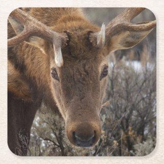 米国、ワイオミングのイエローストーン国立公園3 スクエアペーパーコースター