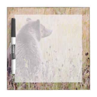 米国、ワイオミングのイエローストーン国立公園、ハイイログマ2 ホワイトボード