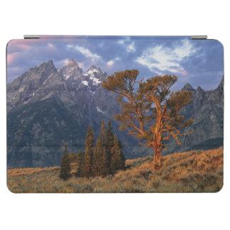 米国、ワイオミング、壮大なTeton NP。 単独ヒマラヤスギ iPad Air カバー