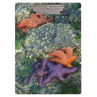 米国、ワシントン州のシャチの島 クリップボード