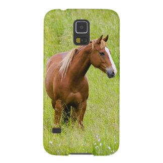 米国、ワシントン州の春分野の馬、 GALAXY S5 ケース