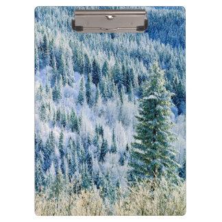米国、ワシントン州のMt.スポケーンの州立公園、《植物》アスペン2 クリップボード