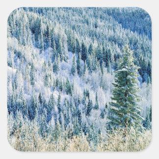 米国、ワシントン州のMt.スポケーンの州立公園、《植物》アスペン2 スクエアシール