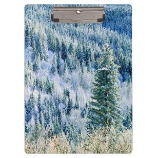 米国、ワシントン州のMt.スポケーンの州立公園、《植物》アスペン クリップボード