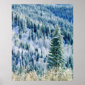 米国、ワシントン州のMt.スポケーンの州立公園、《植物》アスペン ポスター