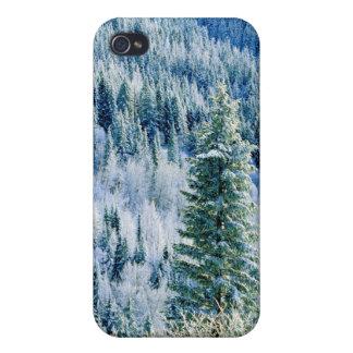 米国、ワシントン州のMt.スポケーンの州立公園、《植物》アスペン iPhone 4 Case