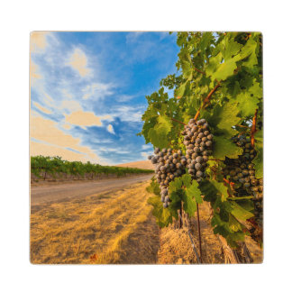 米国、ワシントン州のYakimaの谷。 メルローのブドウ ウッドコースター
